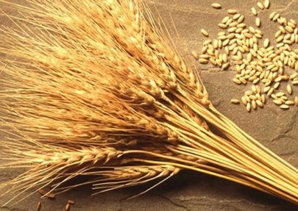 """Результат пошуку зображень за запитом """"З 10 червня набирає чинності новий стандарт на пшеницю"""""""